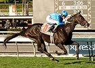 Bejarano to Ride Bolo in Kentucky Derby