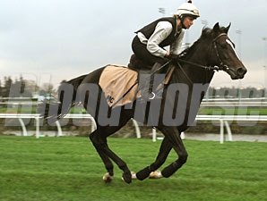 Quest for Peace at Woodbine, October 14, 2011.