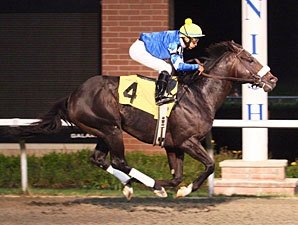 Grade I Winner Gayego to Stand at Norse Ridge
