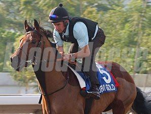 Dubawi Gold - Hong Kong, December 7, 2011
