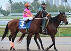 My Adonis Expected to Enter Belmont Stakes