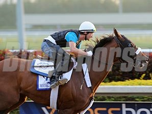 Mucho Macho Man works at Gulfstream Park on January 5, 2013.