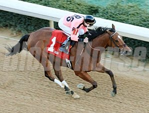 Comedero wins the 2012 No Double Breeders' Stakes.