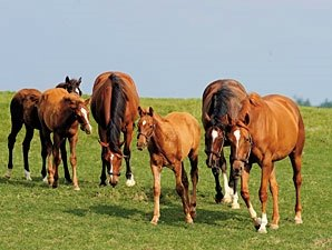 Jockey Club Projects 10% Foal Crop Decline