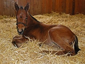 Birth Announcement: Filly for Pure Clan