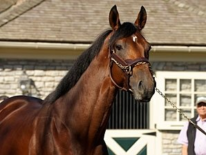 Big Brown Tops FTK Freshman Sire List