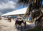 Consignors Upbeat Ahead of F-T Florida Sale