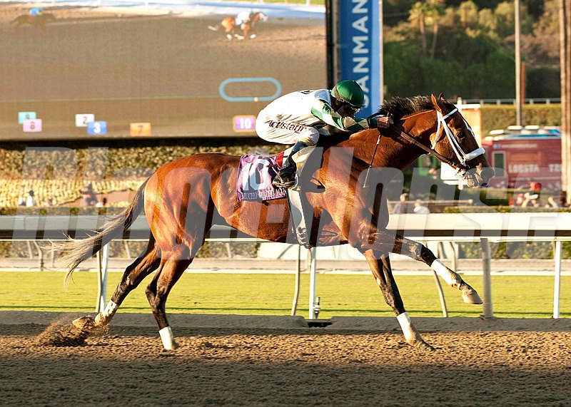 Mucho Macho Man earned his long-anticipated first grade I victory and stamped his return ticket to the $5 million Breeders' Cup Classic (gr. I) with an impressive performance in the $250,000 Awesome Again Stakes September 28. 2013 at Santa Anita Park.