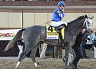 Frosted Pleases McLaughlin in NY Drill