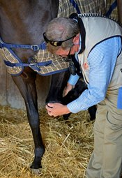 ARCI: Vet's List Changes Aim to Protect Horses