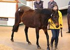 Half Sister to Wrote Tops at Tattersalls
