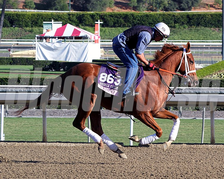 Nesso on the track at Santa Anita Park on October 29, 2013. Photo By: Chad B. Harmon