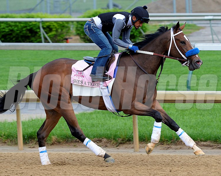Caption: She's A Tiger