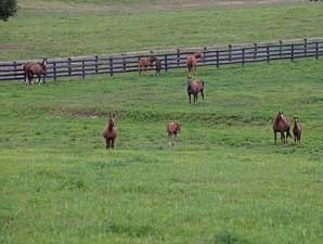 Registered Mares in Minnesota Up by 77%