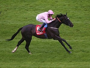 The Fugue Cruises in Irish Champion Stakes