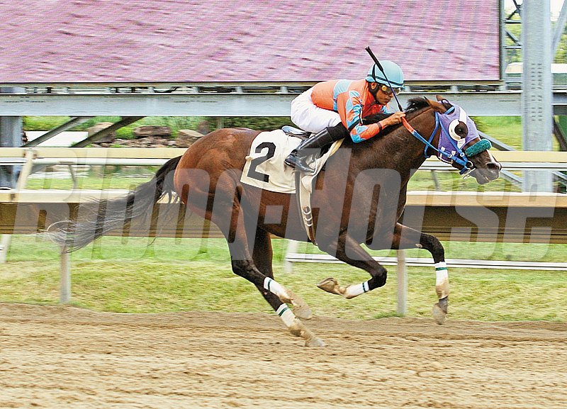What Now #2 winning at Parx Racing in Bensalem, PA on 7/16/11.