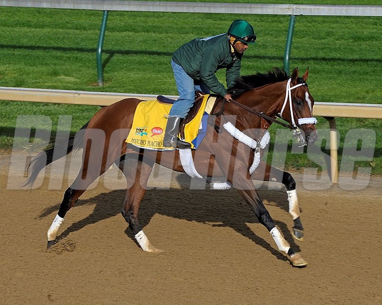 Mucho Macho Man preps for the Kentucky Derby at Churchill Downs April 28, 2011.