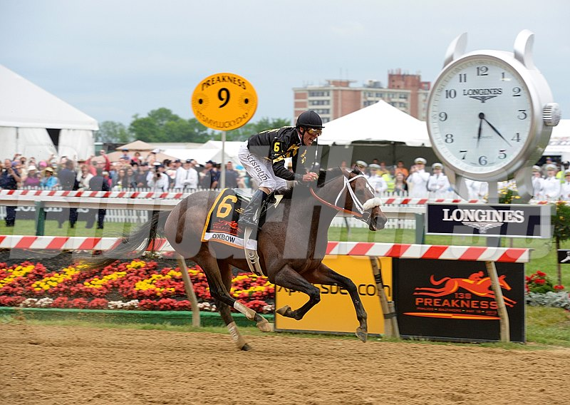 Oxbow and jockey Gary Stevens wins the 2013 Preakness Stakes at Pimlico.