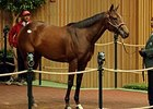 Scarlet Strike to Al Shaqab Racing for $1.3M