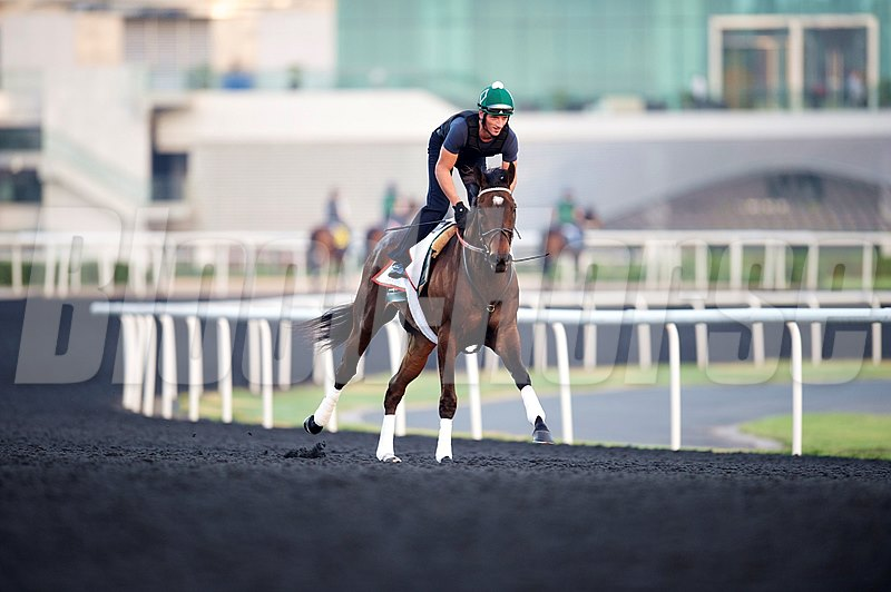 Royal Delta works at Meydan in preperation for the 2013 Dubai World Cup races.