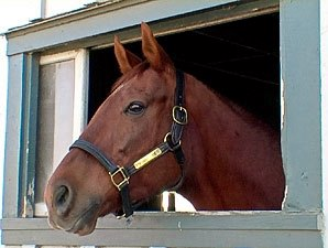 Funny Cide to Make Appearance in Saratoga