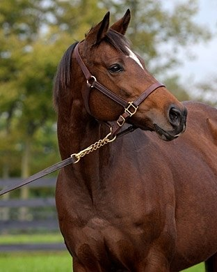 La Ville Rouge, dam of Barbaro.
