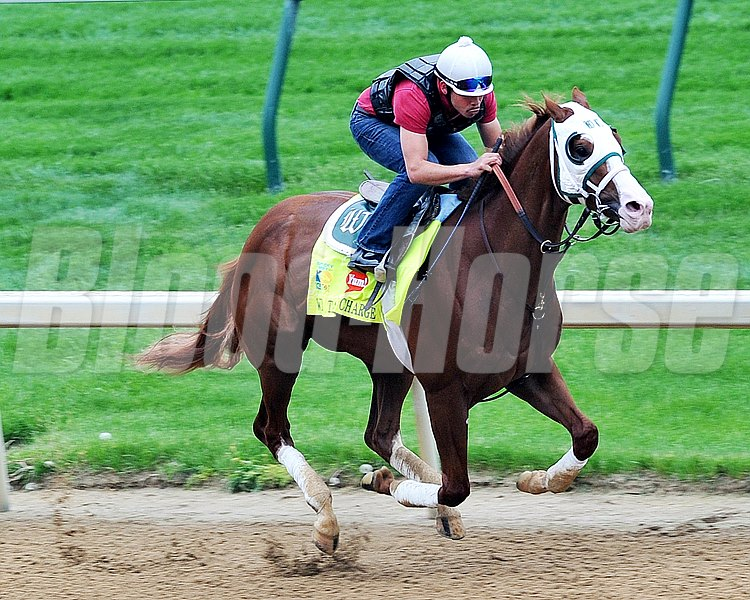 Will Take Charge, Kentucky Derby 2013 Churchill Downs, Louisville KY, photo by Mathea Kelley, 4/29/13