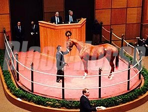 Rose to Gold at the Fasig-Tipton February Sale.