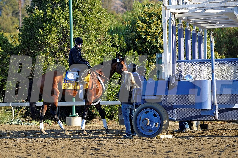 Caption:  Mucho Macho Man practises at the gate