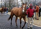 Fasig-Tipton Winter Opening Results Mixed