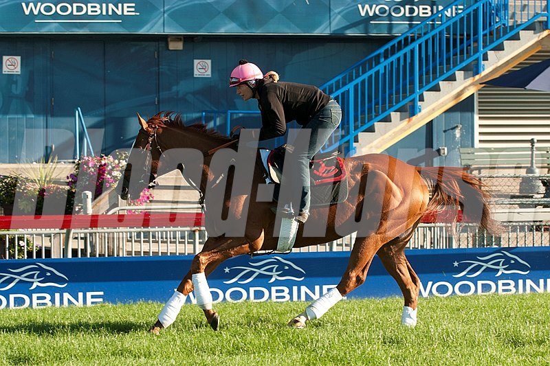 Wise Dan works for the Woodbine Mile.