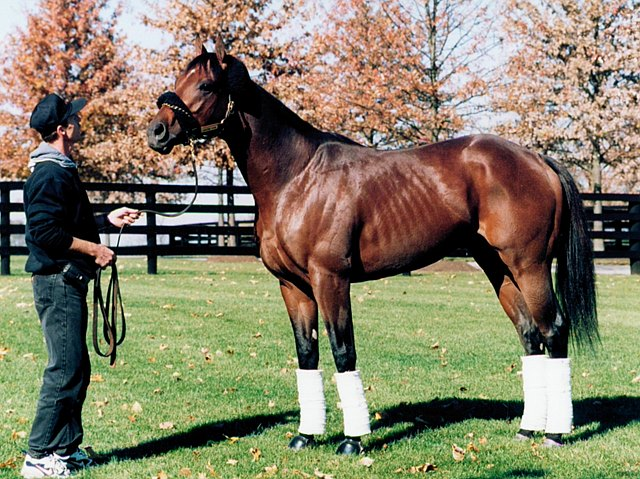 Awesome Again,Adena Springs,11/1998,