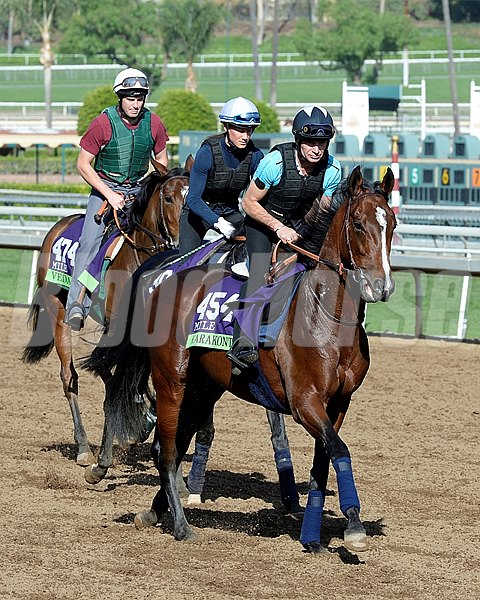 Caption:  Karakontie, followed by Flintshire and Veda