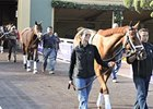 Breeders' Cup News Minute: 10/29/2013