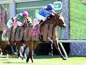 Katie's Eyes wins the Giant's Causeway.
