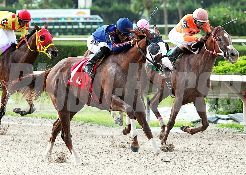 Beloveda overpowers the rest of the field in the 2012 Tropical Starter Series Stakes at Calder Race Course.