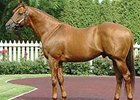 Wiseman's Ferry, Sire of Wise Dan, Dies