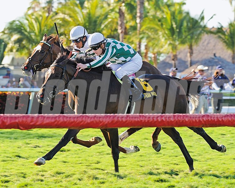 Centre Court, seizing the lead in deep stretch, held off a streaking Kitten's Point by a nose to make it consecutive wins in the $200,000 Grade II Honey Fox Stakes on the Gulfstream Park turf.