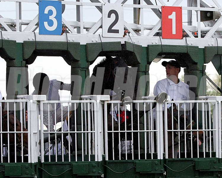 Slim Shadey (#2) tries to jump over the doors on the starting gate prior to the start of The 27th Running of The Woodford Reserve Turf Classic (GI) at Churchill Downs on May 4, 2013.
