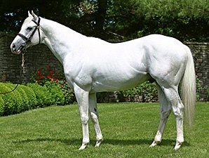 Champion Hansen Sold To South Korea Bloodhorse Com