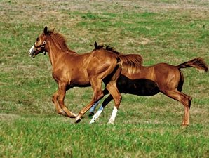 North American Reported Foal Crop Down 2.2%