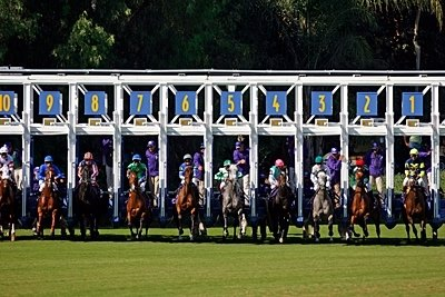 The pack breaks from the gate during the 2008 Breeders' Cup Filly & Mare Turf at Santa Anita.