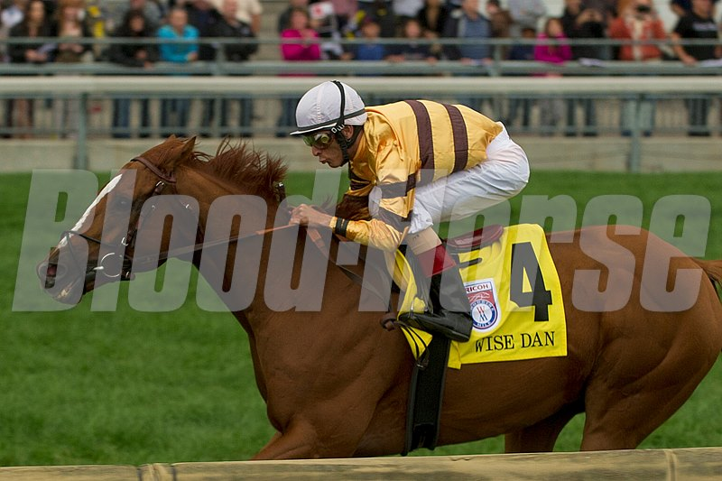 Wise Dan is owned by Morton Fink and trained by Charles LoPresti.