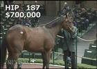 Keeneland Nov. Sale 2014 - Scarlet Strike
