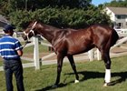 In Fine Fettle, Orb Arrives at Saratoga