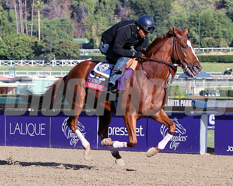 Vagabond Shoes on the track at Santa Anita on October 29, 2013. Photo By: Chad B. Harmon