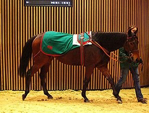 Arqana Sale Closes With Records