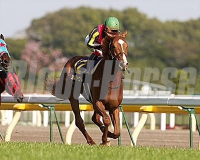 Orfevre Wins the Japanese Two Thousand Guineas.