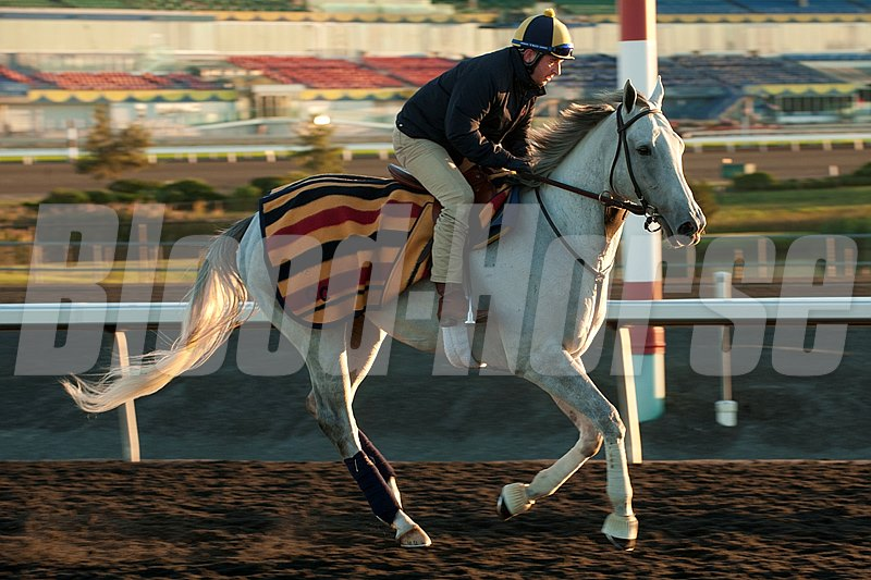 Za Approval gallops at Woodbine Racetack.