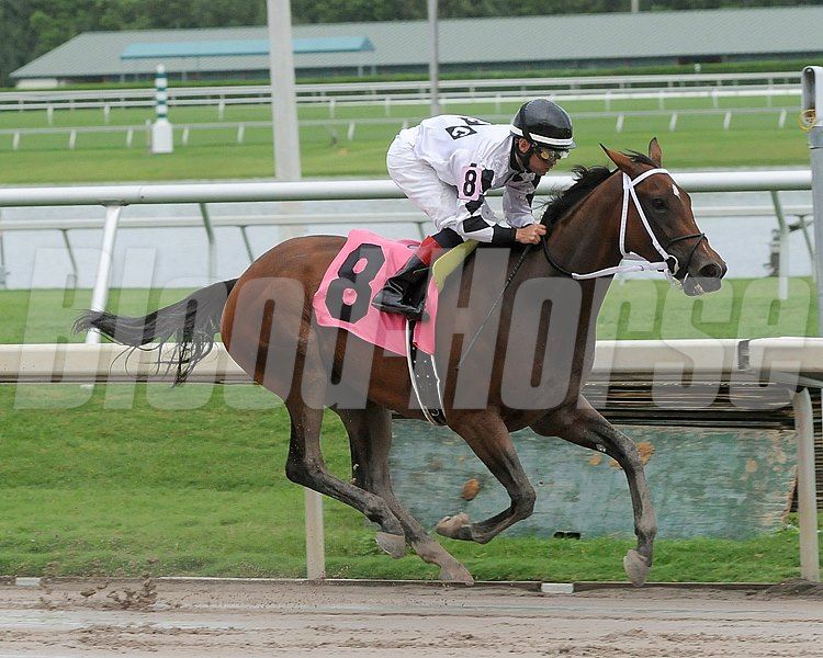 Dreaming of Sophia and jockey Fernando Jara  wins the Cellars Shiraz Stakes at Gulfstream Park in Hallandale, Florida.